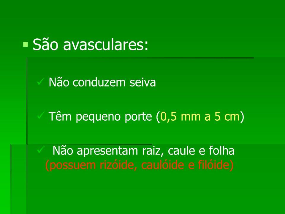 São avasculares: Não conduzem seiva Têm pequeno porte (0,5 mm a 5 cm) Não apresentam raiz, caule e folha (possuem rizóide, caulóide e filóide)