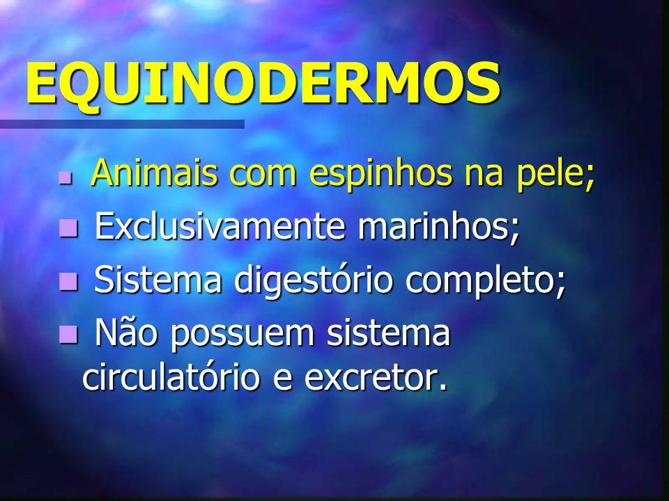 EQUINODERMOS Animais com espinhos na pele; Animais com espinhos na pele; Exclusivamente marinhos; Exclusivamente marinhos; Sistema digestório completo