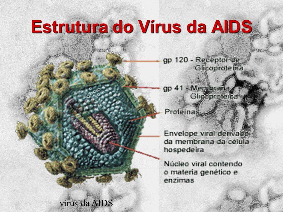 O vírus da Aids encontra-se no sangue, no esperma, na secreção vaginal e no leite materno das pessoas infectadas pelo vírus. Objetos contaminados pela