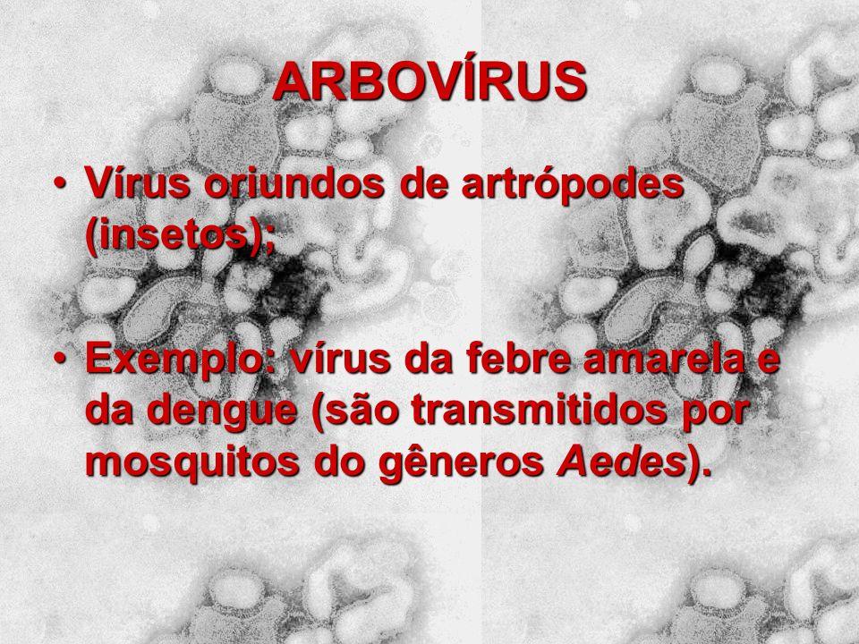 HPV: PAPILOMA VÍRUS A transmissão do vírus pode ocorrer através do contato sexual, não sexual (familiar ou hospitalar por fômitos - objetos contaminad