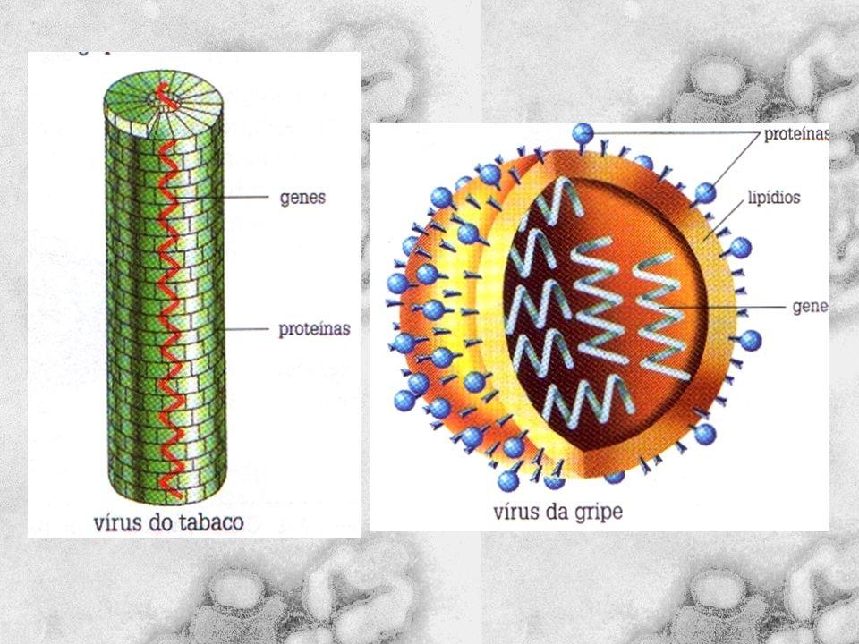Estrutura do Vírus da AIDS vírus da AIDS