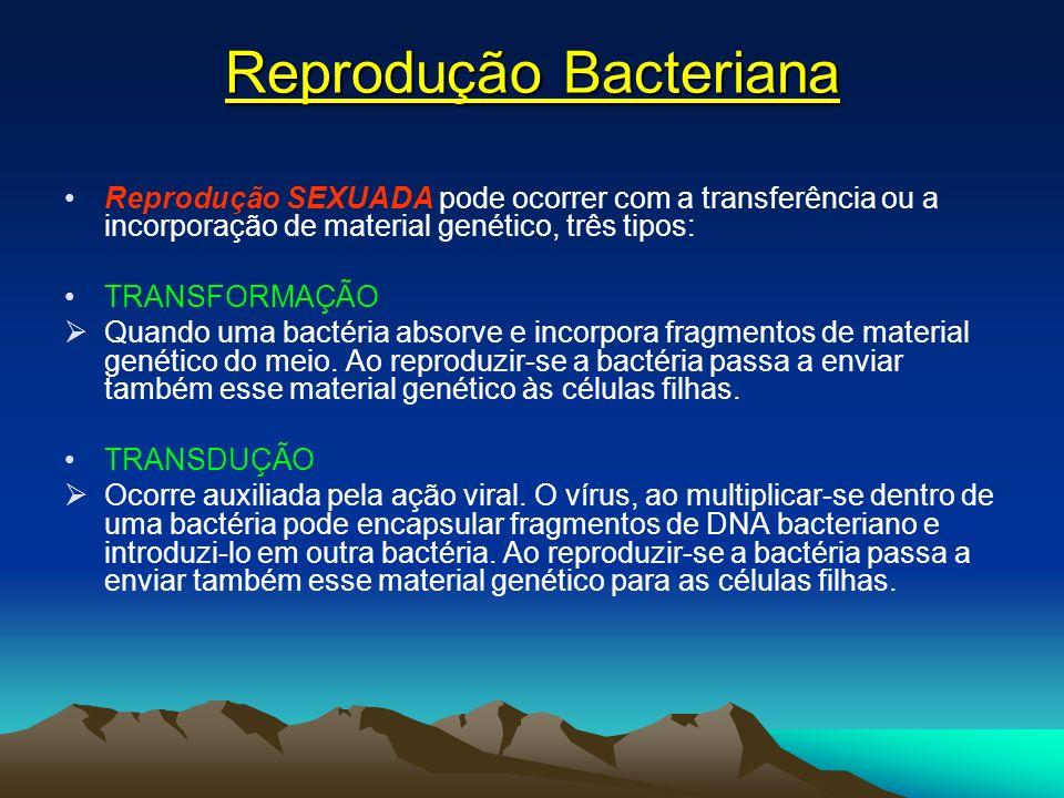 Reprodução Bacteriana Reprodução SEXUADA pode ocorrer com a transferência ou a incorporação de material genético, três tipos: TRANSFORMAÇÃO Quando uma bactéria absorve e incorpora fragmentos de material genético do meio.
