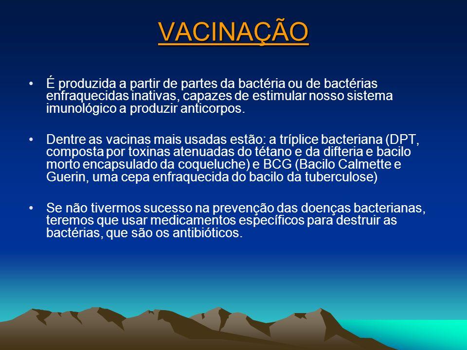 VACINAÇÃO É produzida a partir de partes da bactéria ou de bactérias enfraquecidas inativas, capazes de estimular nosso sistema imunológico a produzir anticorpos.