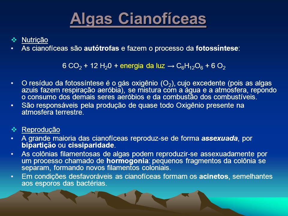 Algas Cianofíceas Nutrição As cianofíceas são autótrofas e fazem o processo da fotossíntese: 6 CO 2 + 12 H 2 0 + energia da luz C 6 H 12 O 6 + 6 O2O2 O resíduo da fotossíntese é o gás oxigênio (O 2 ), cujo excedente (pois as algas azuis fazem respiração aeróbia), se mistura com a água e a atmosfera, repondo o consumo dos demais seres aeróbios e da combustão dos combustíveis.
