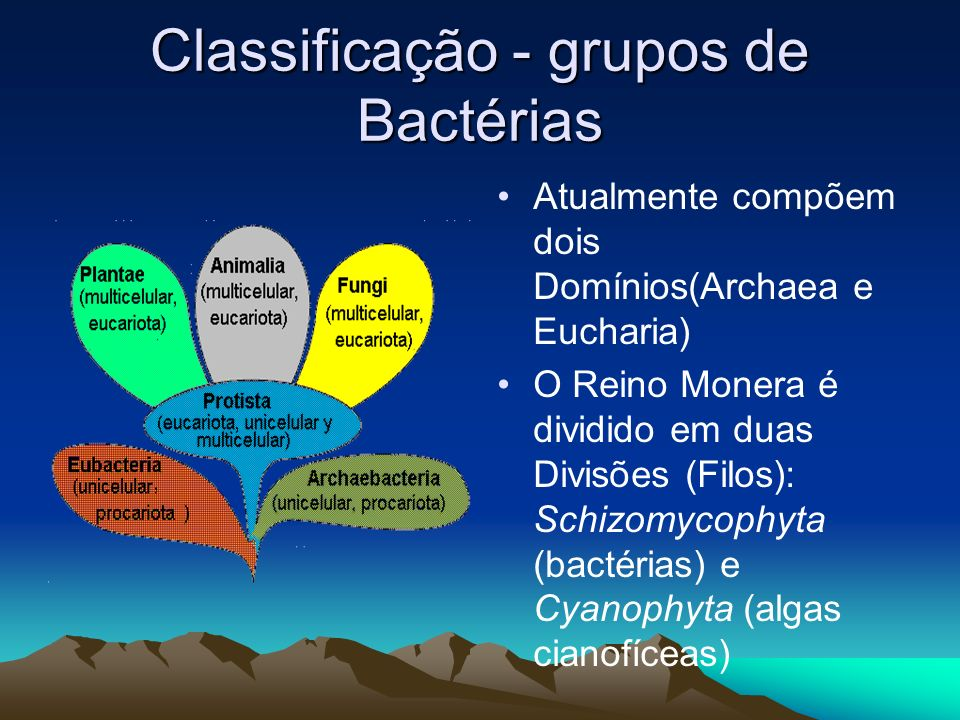 Classificação - grupos de Bactérias Atualmente compõem dois Domínios(Archaea e Eucharia) O Reino Monera é dividido em duas Divisões (Filos): Schizomycophyta (bactérias) e Cyanophyta (algas cianofíceas)