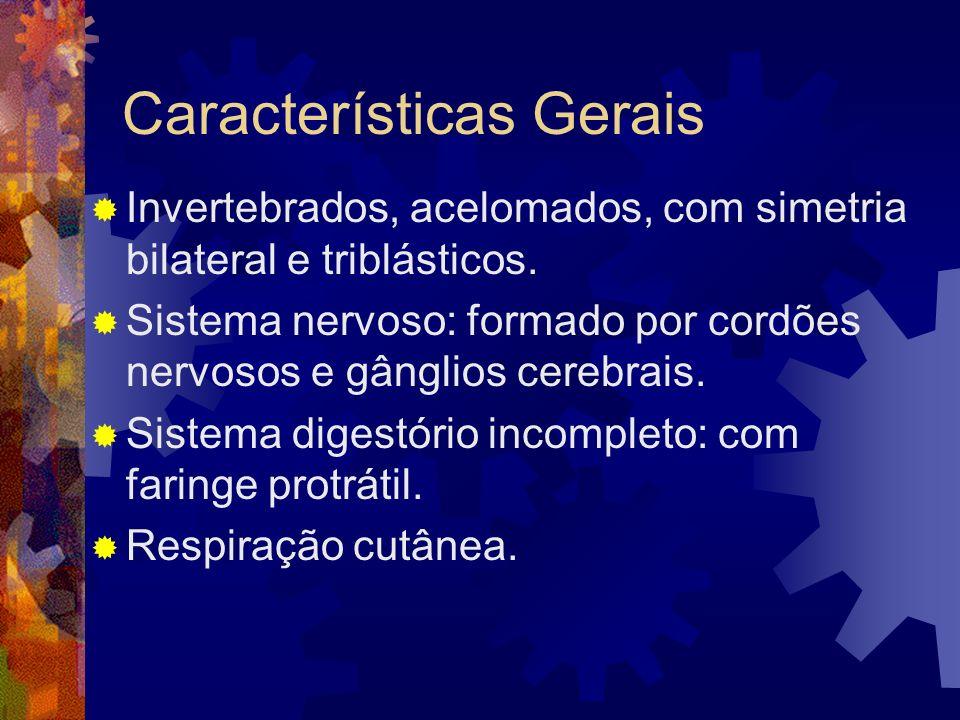Características Gerais Invertebrados, acelomados, com simetria bilateral e triblásticos. Sistema nervoso: formado por cordões nervosos e gânglios cere