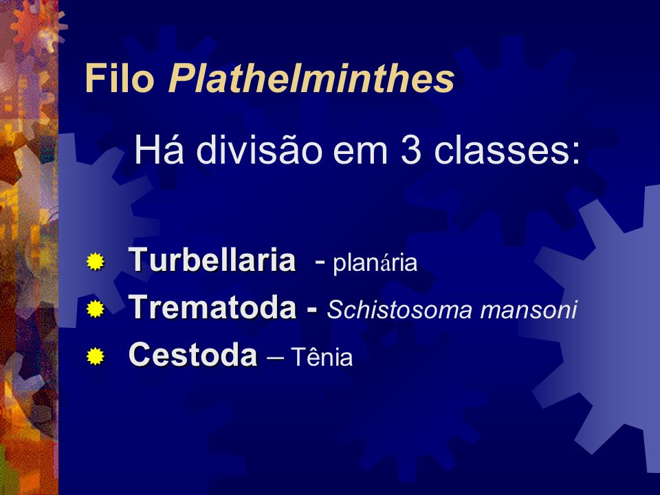 Classe Cestoda: parasitas, corpo metamerizado, epiderme com cutícula protetora; sistema digestivo ausente; são monóicas.