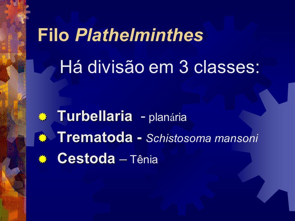 Filo Plathelminthes Há divisão em 3 classes: Turbellaria Turbellaria - plan á ria Trematoda - Trematoda - Schistosoma mansoni Cestoda – Cestoda – Têni