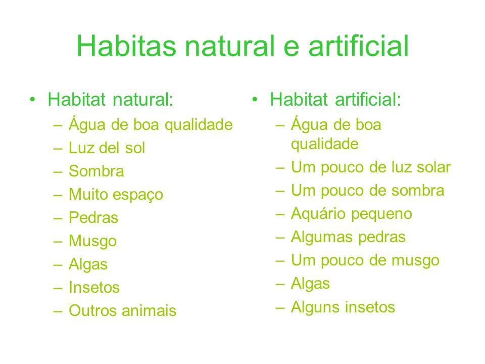 Habitas natural e artificial Habitat natural: –Água de boa qualidade –Luz del sol –Sombra –Muito espaço –Pedras –Musgo –Algas –Insetos –Outros animais