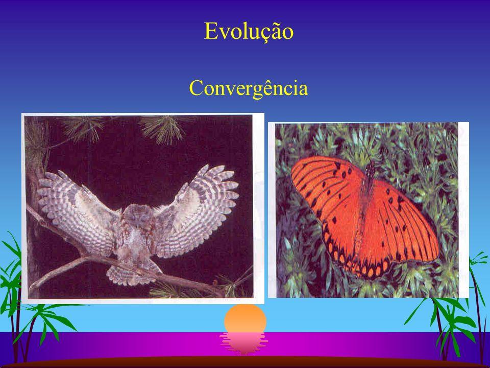 Evolução Convergência