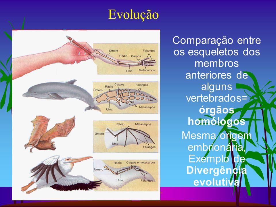 Evolução Comparação entre os esqueletos dos membros anteriores de alguns vertebrados= órgãos homólogos Mesma origem embrionária, Exemplo de Divergênci