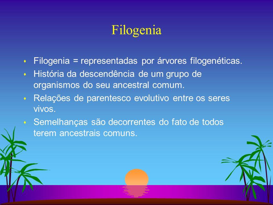 Filogenia s Filogenia = representadas por árvores filogenéticas. s História da descendência de um grupo de organismos do seu ancestral comum. s Relaçõ