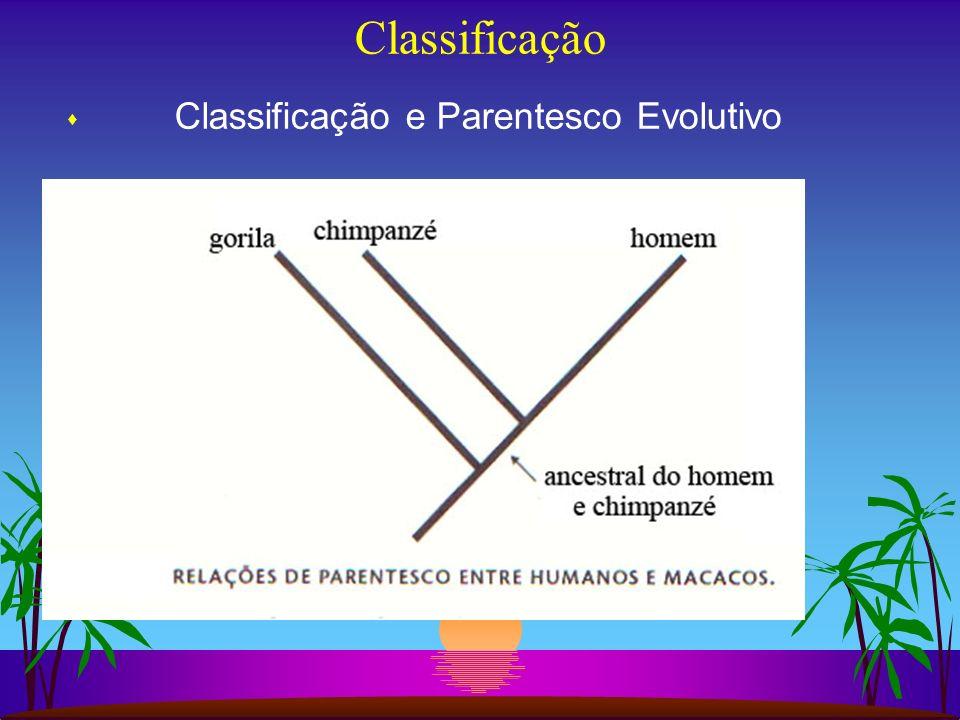 Classificação s Classificação e Parentesco Evolutivo