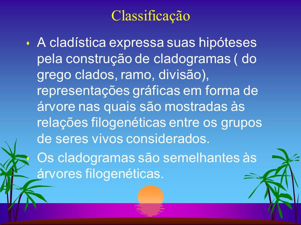Classificação s A cladística expressa suas hipóteses pela construção de cladogramas ( do grego clados, ramo, divisão), representações gráficas em form