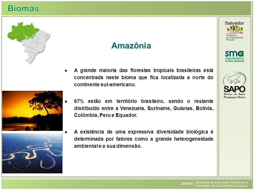 Amazônia A grande maioria das florestas tropicais brasileiras está concentrada neste bioma que fica localizada a norte do continente sul-americano. 67