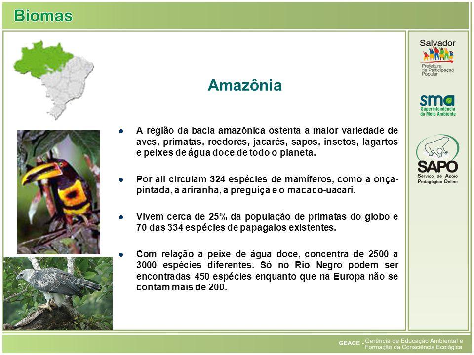Amazônia A região da bacia amazônica ostenta a maior variedade de aves, primatas, roedores, jacarés, sapos, insetos, lagartos e peixes de água doce de