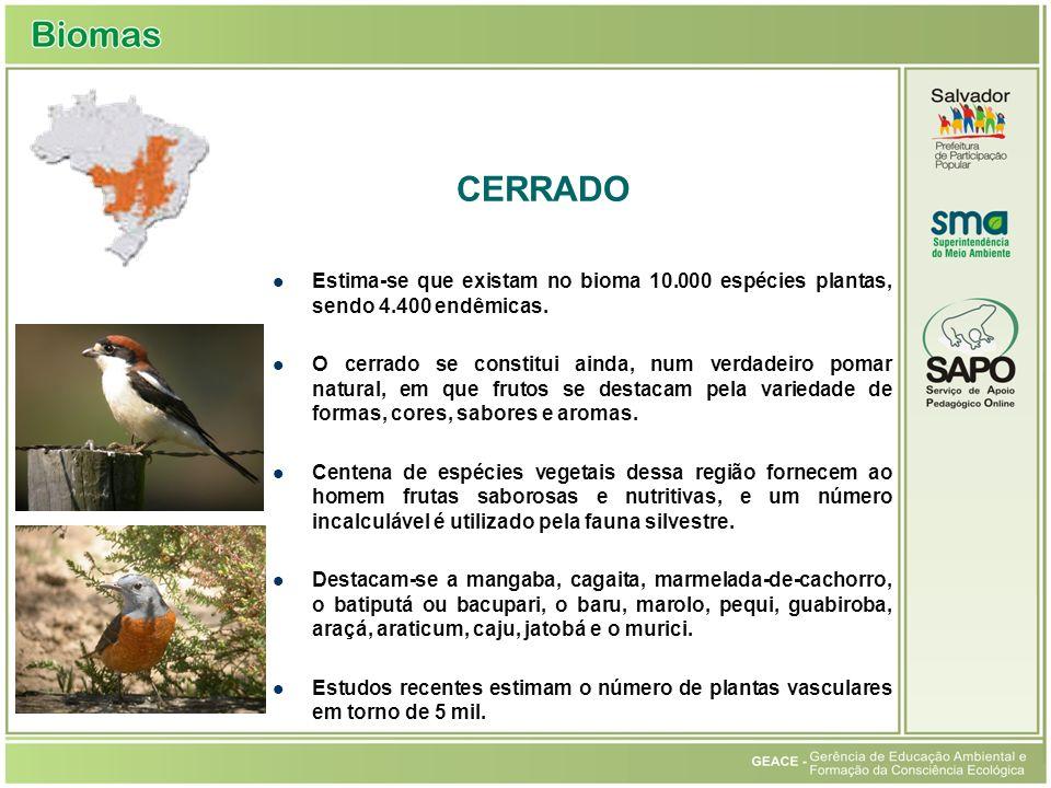 Estima-se que existam no bioma 10.000 espécies plantas, sendo 4.400 endêmicas. O cerrado se constitui ainda, num verdadeiro pomar natural, em que frut
