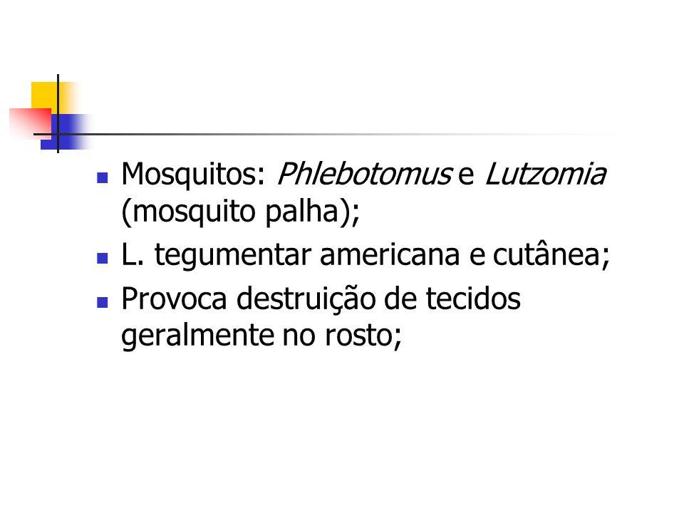 Mosquitos: Phlebotomus e Lutzomia (mosquito palha); L.