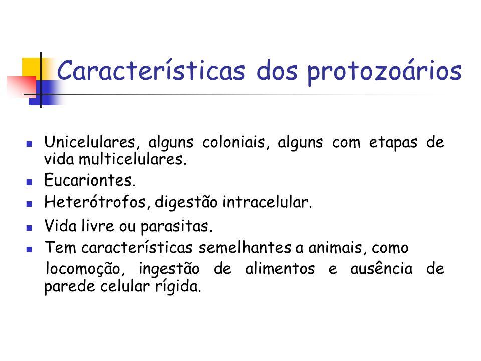 Características dos protozoários Unicelulares, alguns coloniais, alguns com etapas de vida multicelulares.