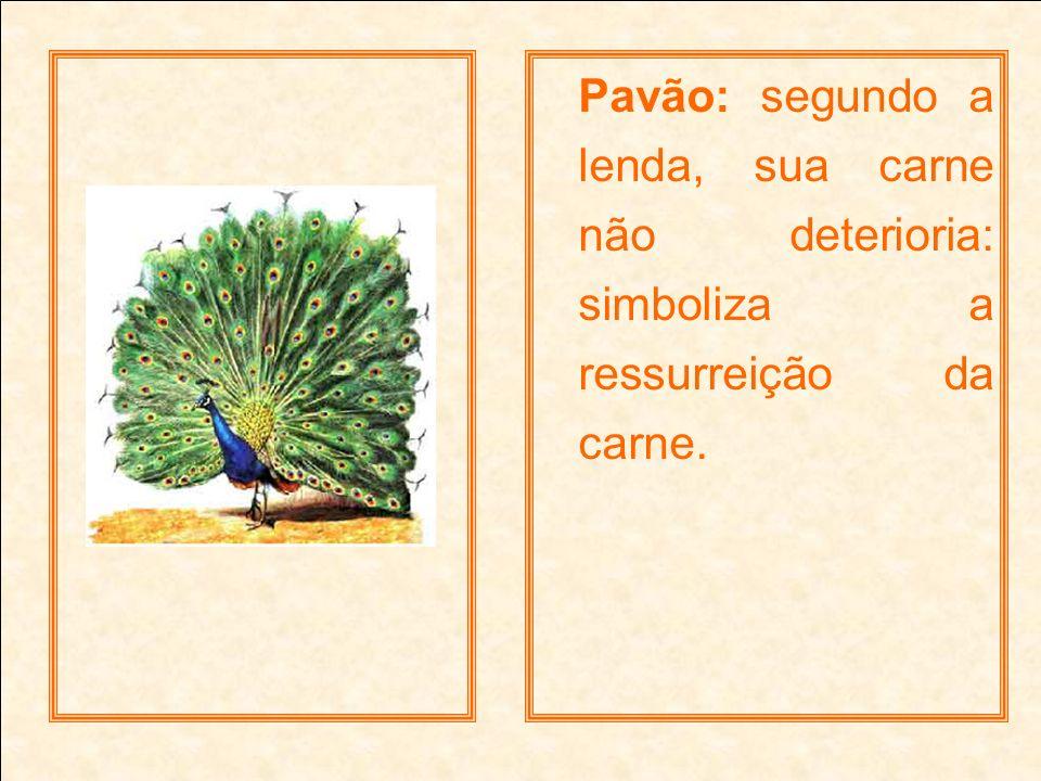 Pavão: segundo a lenda, sua carne não deterioria: simboliza a ressurreição da carne.