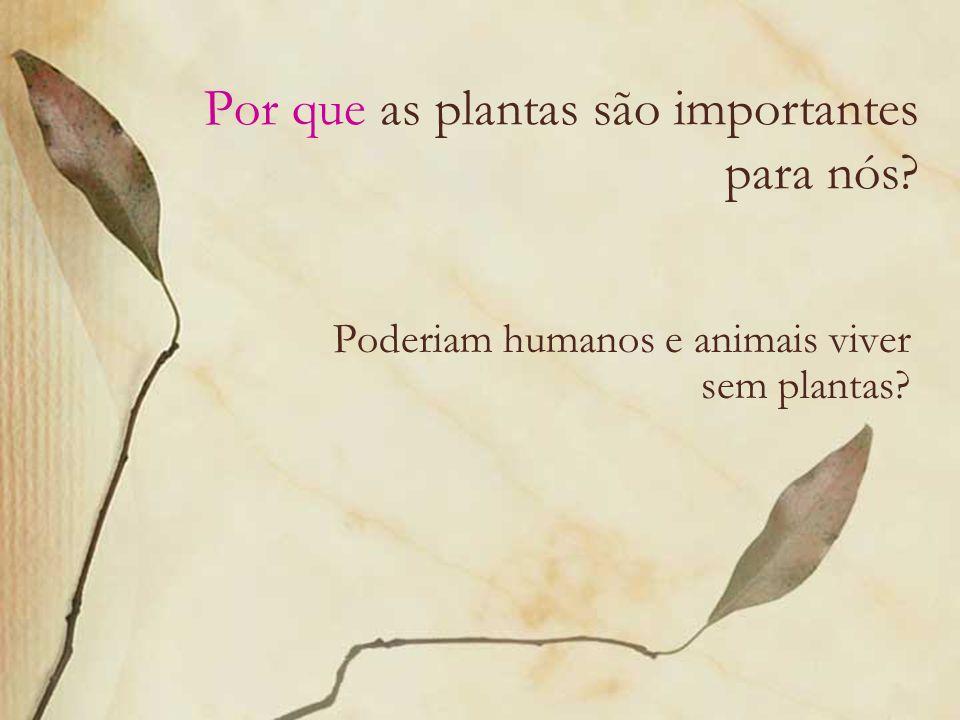 Idéias do que pensamos… Plantas: Nos ajudam a respirar Nos dão sombra São casas para animais São bonitas de ver Nos dão adubo composto Dão alimento aos animais Nos dão alimento