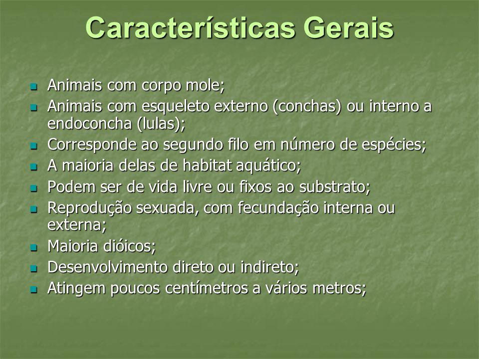 Características Gerais Animais com corpo mole; Animais com corpo mole; Animais com esqueleto externo (conchas) ou interno a endoconcha (lulas); Animai