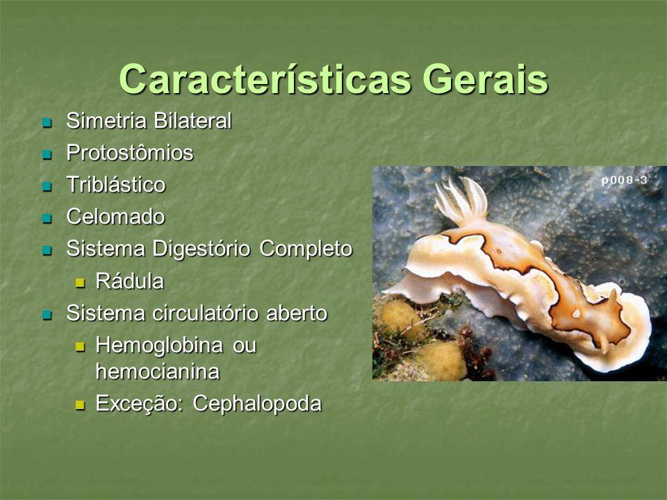 Características Gerais Simetria Bilateral Simetria Bilateral Protostômios Protostômios Triblástico Triblástico Celomado Celomado Sistema Digestório Co