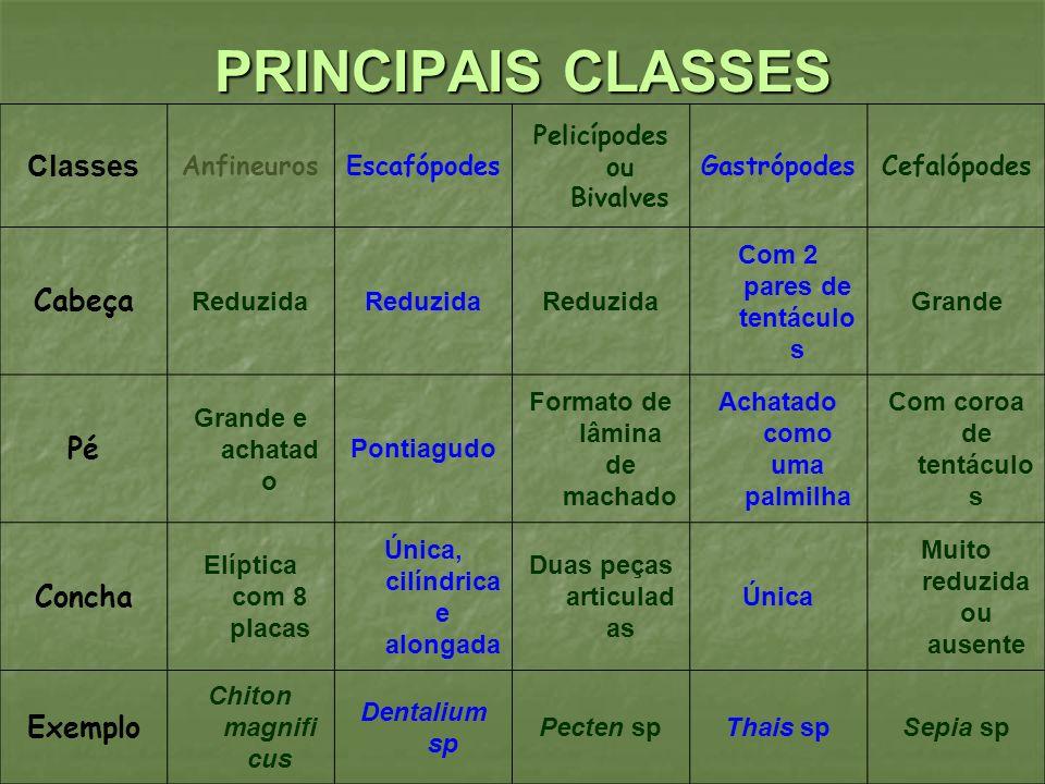 PRINCIPAIS CLASSES Classes AnfineurosEscafópodes Pelicípodes ou Bivalves GastrópodesCefalópodes Cabeça Reduzida Com 2 pares de tentáculo s Grande Pé G