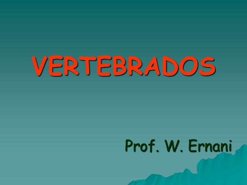 VERTEBRADOS Prof. W. Ernani