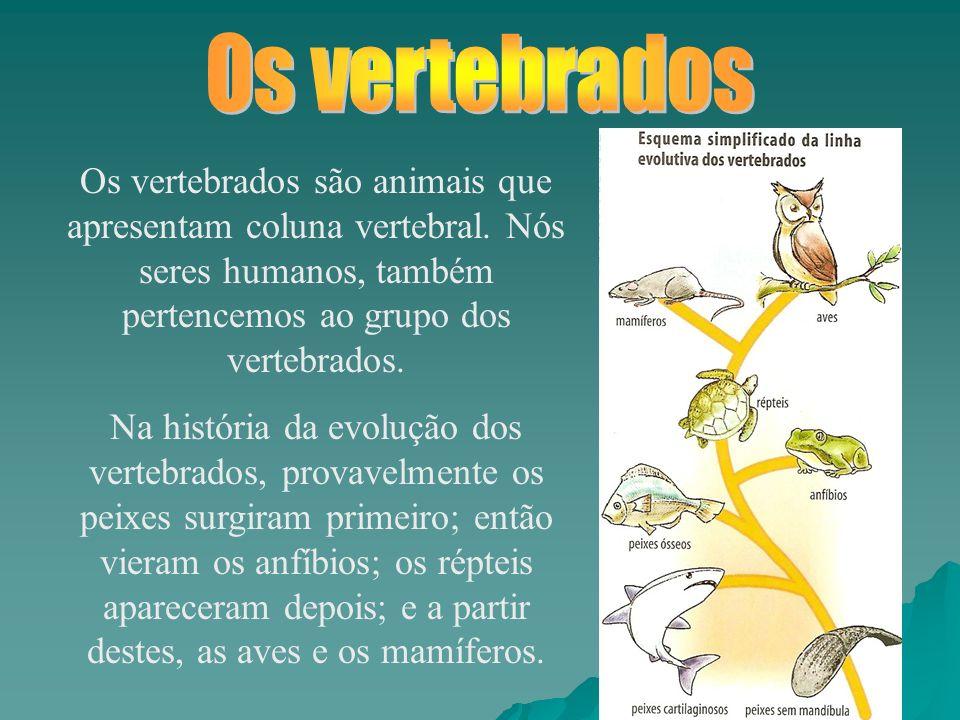Os vertebrados são animais que apresentam coluna vertebral.