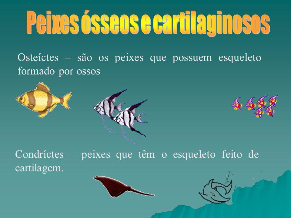 Osteíctes – são os peixes que possuem esqueleto formado por ossos Condríctes – peixes que têm o esqueleto feito de cartilagem.