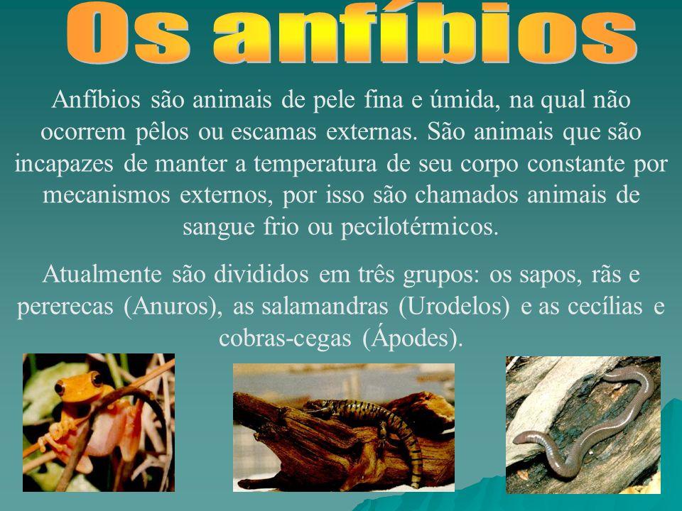 Anfíbios são animais de pele fina e úmida, na qual não ocorrem pêlos ou escamas externas.