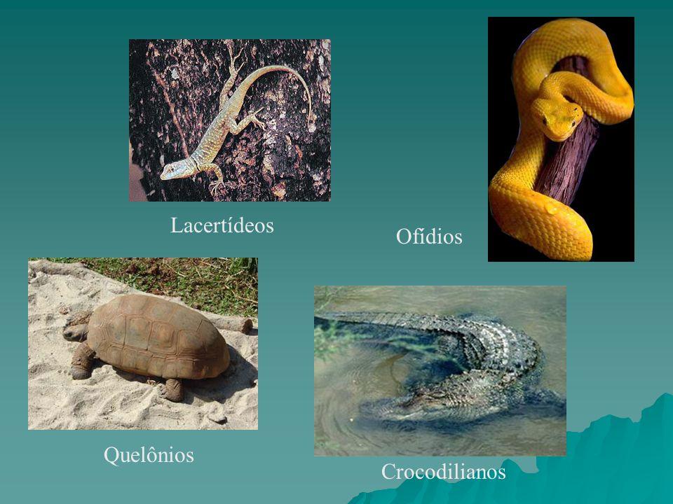 Quelônios Crocodilianos Lacertídeos Ofídios