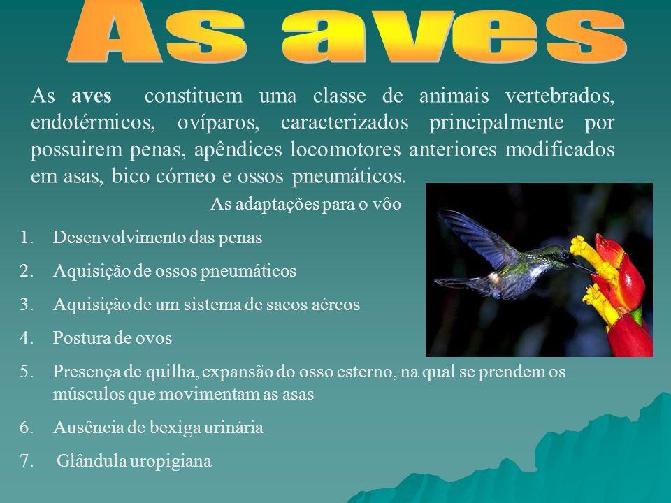 As aves constituem uma classe de animais vertebrados, endotérmicos, ovíparos, caracterizados principalmente por possuirem penas, apêndices locomotores anteriores modificados em asas, bico córneo e ossos pneumáticos.