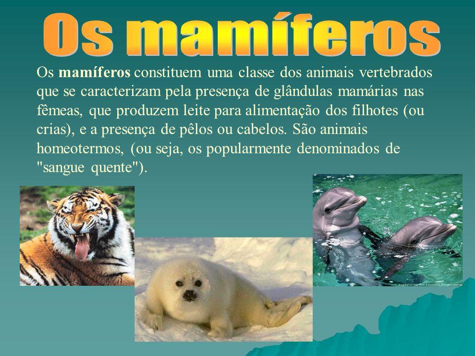 Os mamíferos constituem uma classe dos animais vertebrados que se caracterizam pela presença de glândulas mamárias nas fêmeas, que produzem leite para alimentação dos filhotes (ou crias), e a presença de pêlos ou cabelos.