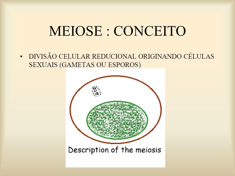 Meiose Importância Redução do número de cromossomos a metade. Finalidades Produção de gametas em animais Produção de esporos nas plantas