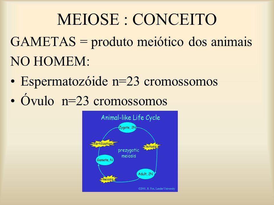 MEIOSE I MEIOSE II