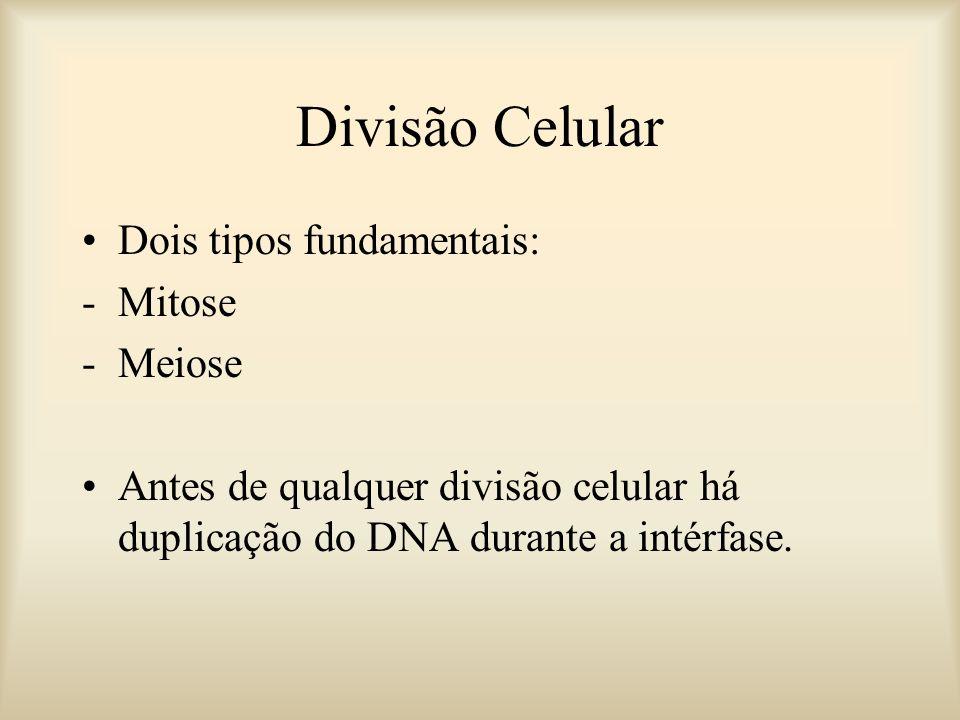 Divisão Celular Dois tipos fundamentais: -Mitose -Meiose Antes de qualquer divisão celular há duplicação do DNA durante a intérfase.