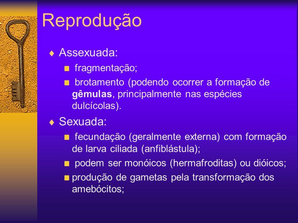 Reprodução Assexuada: fragmentação; brotamento (podendo ocorrer a formação de gêmulas, principalmente nas espécies dulcícolas). Sexuada: fecundação (g