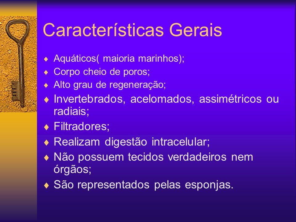 Características Gerais Aquáticos( maioria marinhos); Corpo cheio de poros; Alto grau de regeneração; Invertebrados, acelomados, assimétricos ou radiai