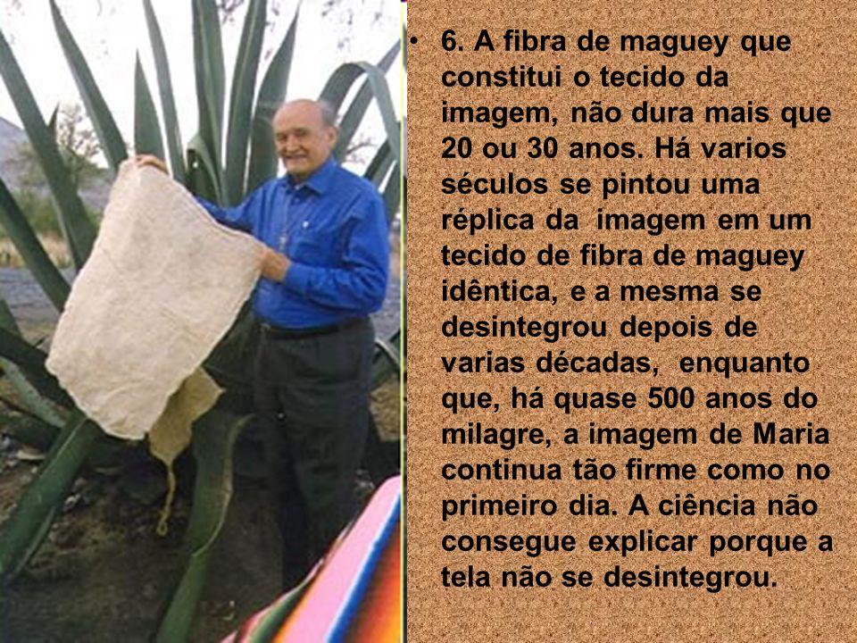 6.A fibra de maguey que constitui o tecido da imagem, não dura mais que 20 ou 30 anos.