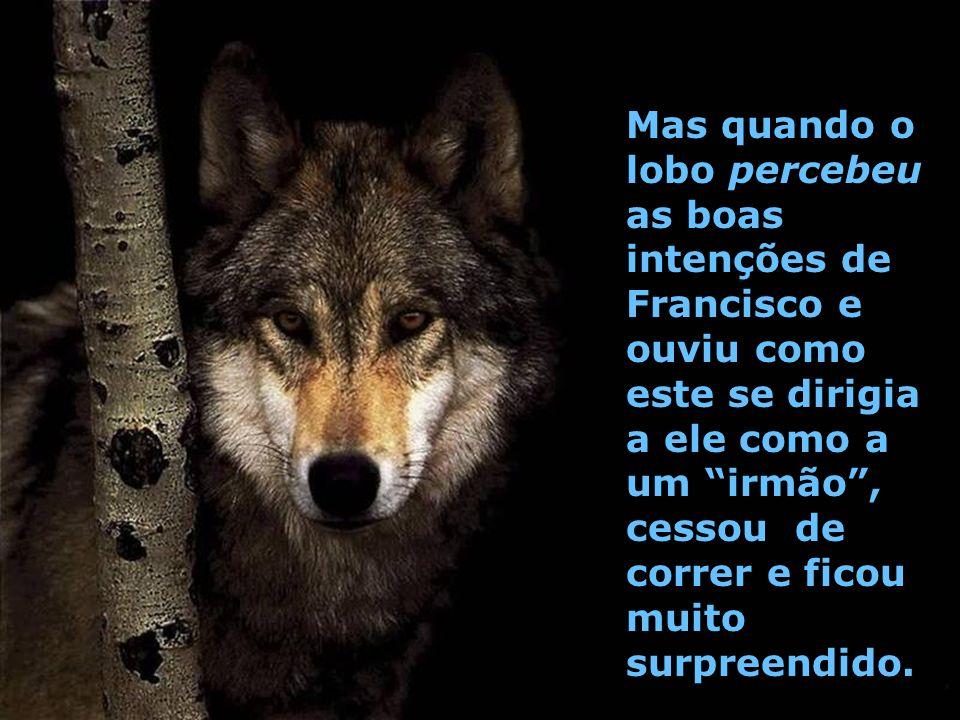 Mas quando o lobo percebeu as boas intenções de Francisco e ouviu como este se dirigia a ele como a um irmão, cessou de correr e ficou muito surpreendido.