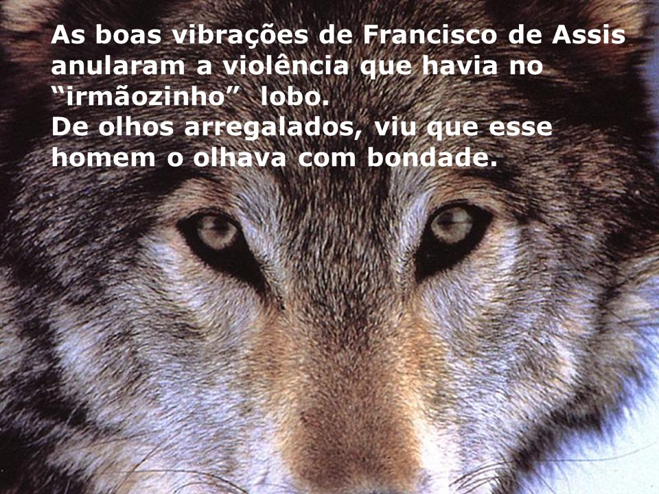 As boas vibrações de Francisco de Assis anularam a violência que havia no irmãozinho lobo.