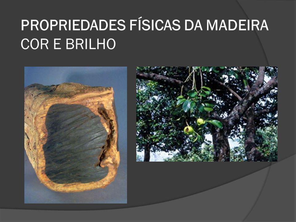 PROPRIEDADES FÍSICAS DA MADEIRA COR E BRILHO