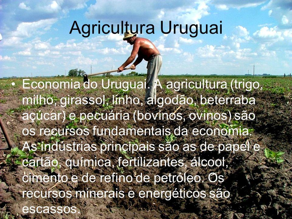 Agricultura Uruguai Economia do Uruguai. A agricultura (trigo, milho, girassol, linho, algodão, beterraba açúcar) e pecuária (bovinos, ovinos) são os