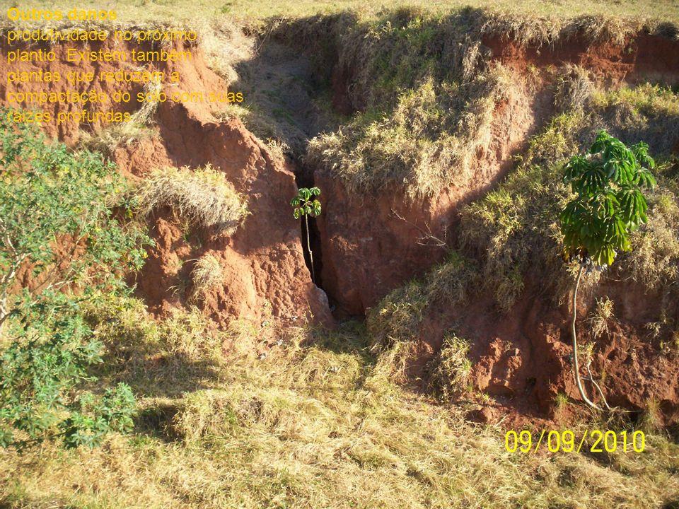 Outros danos produtividade no próximo plantio. Existem também plantas que reduzem a compactação do solo com suas raizes profundas