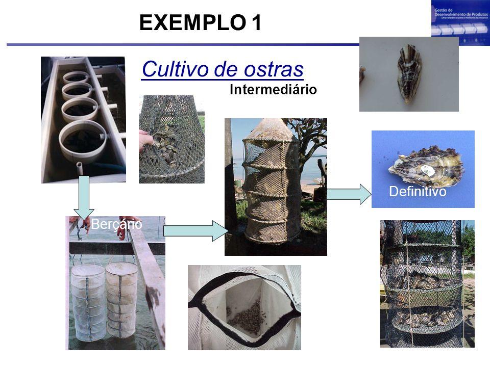 Cultivo de ostras Definitivo Berçário Intermediário EXEMPLO 1