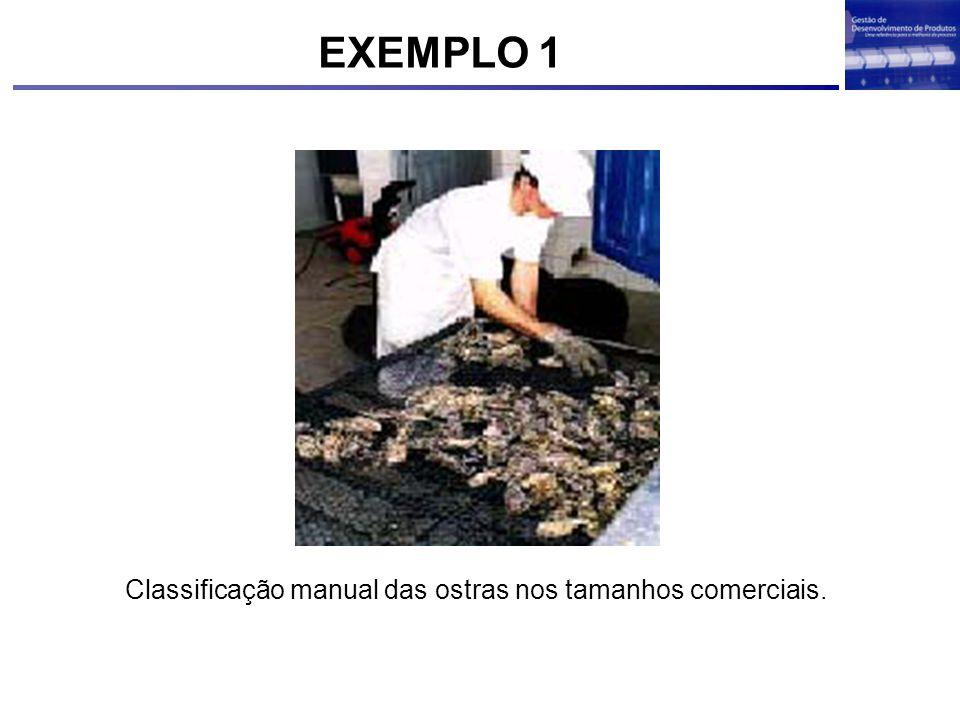 Classificação manual das ostras nos tamanhos comerciais. EXEMPLO 1