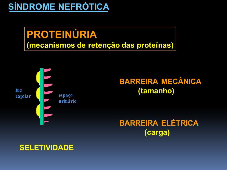 SÍNDROME NEFRÓTICA PROTEINÚRIA (mecanismos de retenção das proteínas) BARREIRA MECÂNICA (tamanho) BARREIRA ELÉTRICA (carga) SELETIVIDADE espaço urinár