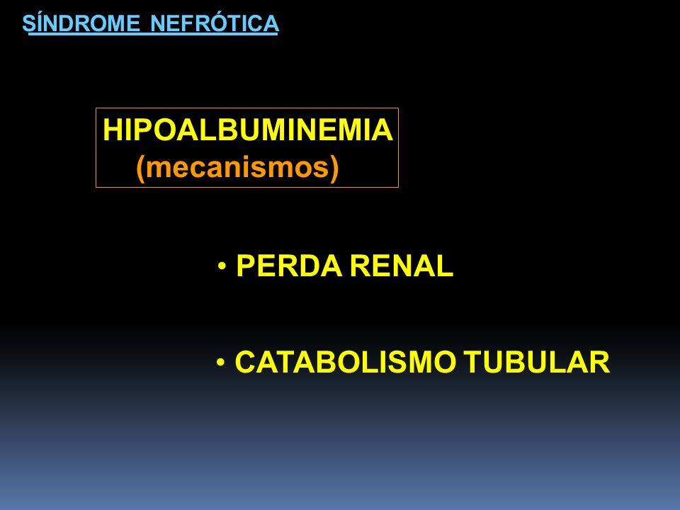 HIPOALBUMINEMIA (mecanismos) PERDA RENAL CATABOLISMO TUBULAR SÍNDROME NEFRÓTICA